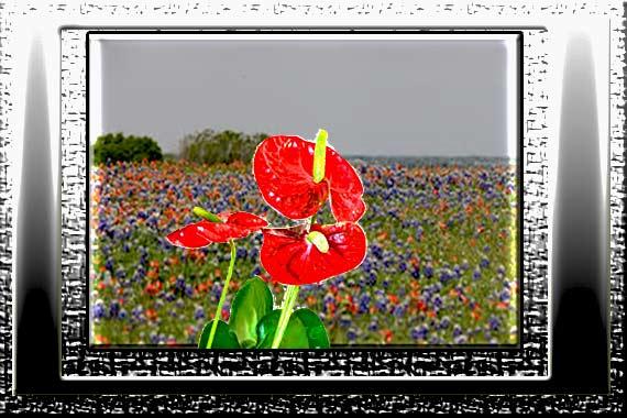 Flower----.