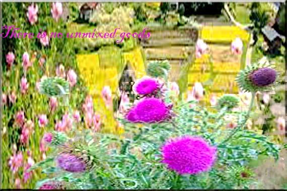 Flower..........................
