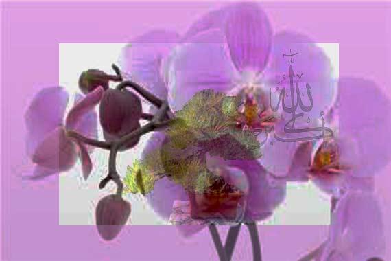 flower..................